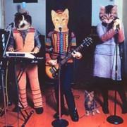 cat-band