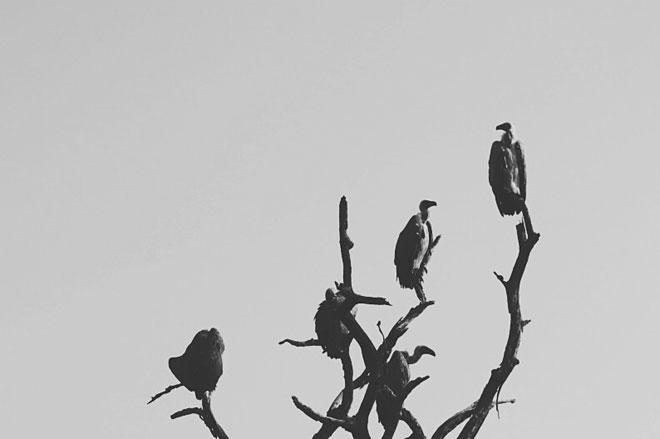 Miss Moss Kruger Park photographs