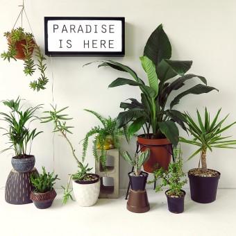 Skinny laMinx: Paradise is Here