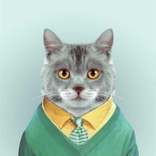 YAGO-PARTAL-Cat