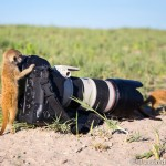 Double Tap: Will Burrard-Lucas