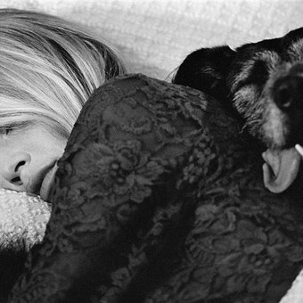 Brigitte Bardot (Bed with Dog) by Terry O'Neill